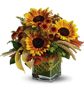 Teleflora's Funflowers in Tyler TX, Country Florist & Gifts