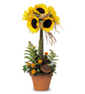 Sweet Sunflower Topiary in Belford NJ, Flower Power Florist & Gifts