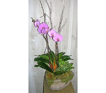 Hip Orchid Planter in Dallas TX, Petals & Stems Florist