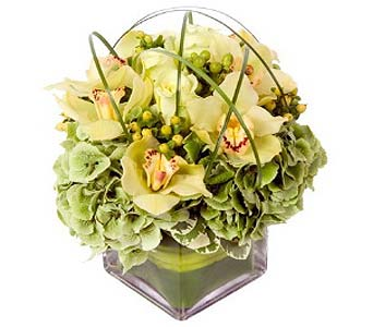 Green Goddess in Fairfield CT, Town and Country Florist