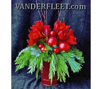Royal Red Exclusive in EtobicokeON, VANDERFLEET Flowers