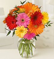 DOZEN GERBERA DAISIES in Homer NY, Arnold's Florist & Greenhouses & Gifts