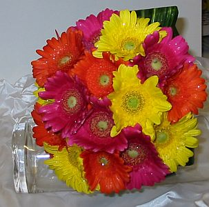 Colourful Gerberas in Guelph ON, Patti's Flower Boutique