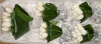 Tulip Bouquets in Guelph ON, Patti's Flower Boutique