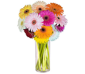Gerbera Medley in Scranton PA, McCarthy Flower Shop<br>of Scranton