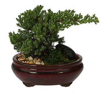 Japanese Bonsai in Drexel Hill PA, Farrell's Florist