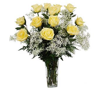 One Dozen Yellow Roses with Baby�s Breath in Madison WI, Felly's Flowers