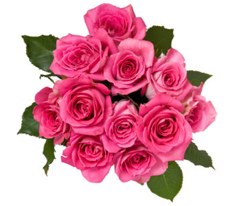 12 Pink Roses (wrapped) in Calgary AB, All Flowers and Gifts