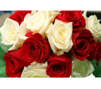 Red & White Roses (wrapped) in Calgary AB, All Flowers and Gifts