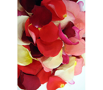 Romantic Rose Petals in Salt Lake City UT, Huddart Floral