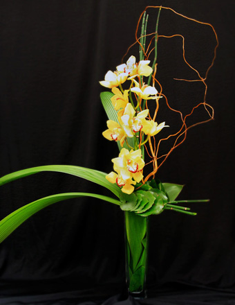 Yellow Cymbidium  in Los Angeles CA, Century City Flower Mart