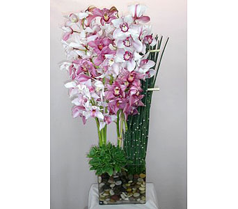 Orchid Dream in Los Angeles CA, Dave's Flowers