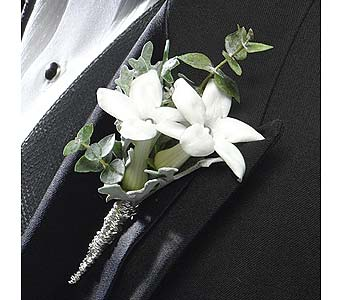 Silver Stephanotis in Coplay PA, The Garden of Eden