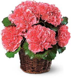 Carnation Expression in Rock Island IL, Colman Florist