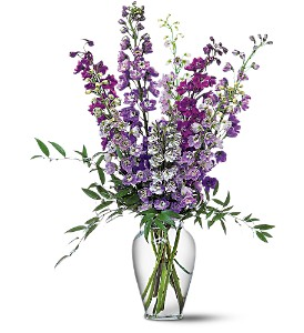 Delphinium Dreams in Hudson, New Port Richey, Spring Hill FL, Tides 'Most Excellent' Flowers