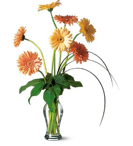 Grand Gerberas in Modesto, Riverbank & Salida CA, Rose Garden Florist