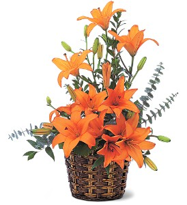 Asiatic Lilies in Hendersonville TN, Brown's Florist