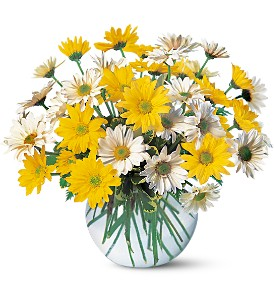 Dashing Daisies in Hartford CT, De Vars - Phillips Florist & Antiques