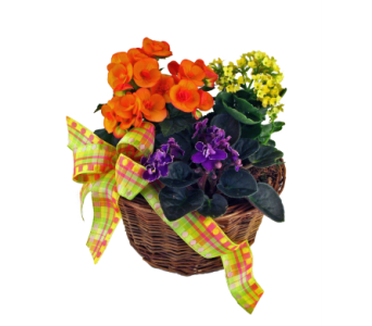 French Garden Basket in Indianapolis IN, McNamara Florist