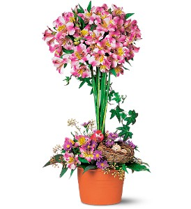 Alstroemeria Topiary in Bandera TX, The Gingerbread House