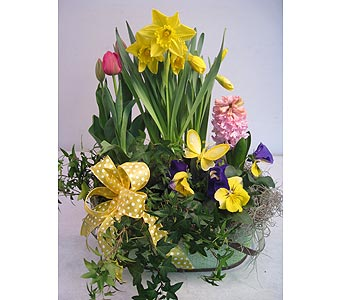 Easter Bulb Basket in Lower Gwynedd PA, Valleygreen Flowers and Gifts