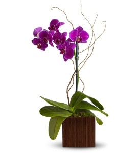 Teleflora's Bamboo Elegance in Sylmar CA, Saint Germain Flowers Inc.