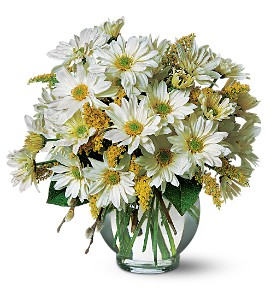 Cheerful Daisy's by Petals & Stems in Dallas TX, Petals & Stems Florist