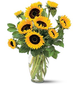 Shining Sunflowers in Orange CA, Main Street Florist