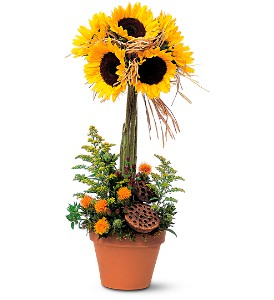 Sunflower Topiary in Norwich NY, Pires Flower Basket, Inc.