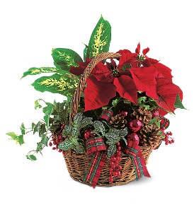 Holiday Planter Basket in South Haven MI, The Rose Shop
