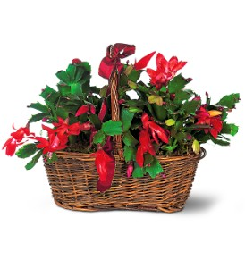 Christmas Cactus in Sayville NY, Sayville Flowers Inc