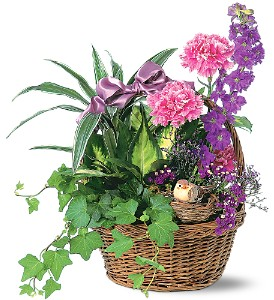 Garden Comforts in Ajax ON, Reed's Florist Ltd