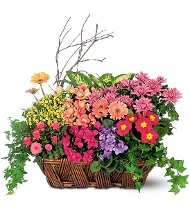 Deluxe European Garden Basket in Boston MA, Exotic Flowers