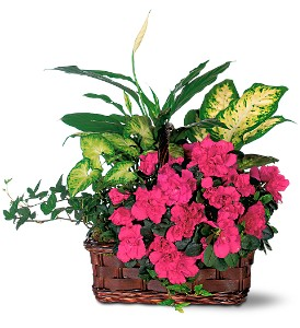 Azalea Attraction Garden Basket in Friendswood TX, Lary's Florist & Designs LLC