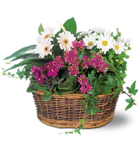 Traditional European Garden Basket by Petals & Stems in Dallas TX, Petals & Stems Florist