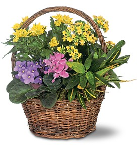 Petite European Basket in West Los Angeles CA, Sharon Flower Design