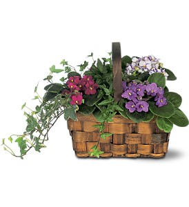 Mixed African Violet Basket in Norwalk CT, Bruce's Flowers & Greenhouses