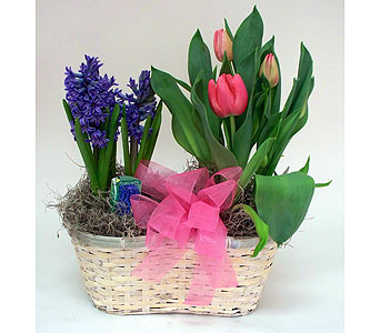 Happy Spring in Indianapolis IN, Gillespie Florists