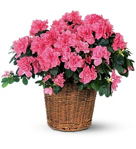Pink Azalea in Huntington WV, Archer's Flowers, Inc.