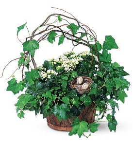 Kalanchoe and Ivy Basket in Kennebunk ME, Blooms & Heirlooms ��