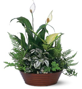White Garden in New York NY, New York Best Florist