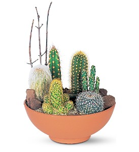 Cactus Garden by Petals & Stems in Dallas TX, Petals & Stems Florist