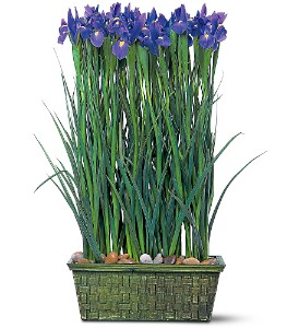 Iris Garden in Washington IA, Wolf Floral, Inc