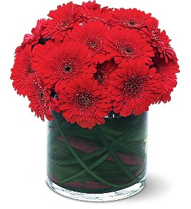 Red Gerbera Collection in Santa Monica CA, Edelweiss Flower Boutique