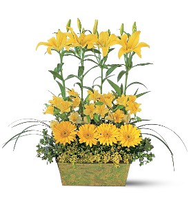 Yellow Garden Rows in Needham MA, Needham Florist
