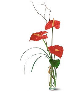 The Simplicity of Anthuriums in West Bloomfield MI, Happiness is...Flowers & Gifts