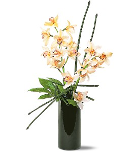 Artful Orchids in Metairie LA, Golden Touch Florist