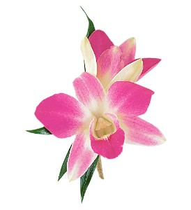 Purple Dendrobium Boutonniere in Sun City Center FL, Sun City Center Flowers & Gifts, Inc.