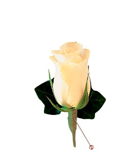 White Rose and Ivy Boutonniere in Sun City Center FL, Sun City Center Flowers & Gifts, Inc.