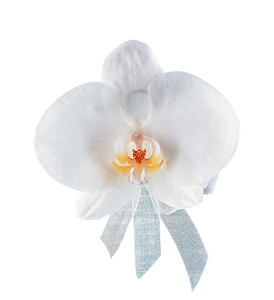White Phalaenopsis Corsage in Towson MD, Radebaugh Florist and Greenhouses